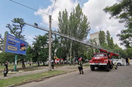 У Миколаєві рятувальники дістали з дерева кошеня