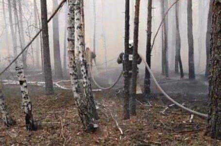 У Чорнобильській зоні ліквідували пожежу