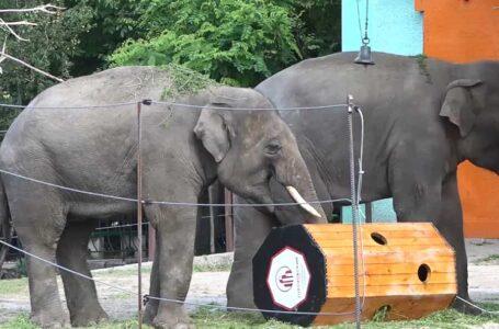Слонам у миколаївському зоопарку подарували нову розвагу