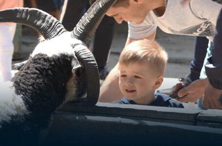 Ажіотаж та морозиво від очільника міста: як у миколаївському зоопарку відсвяткували День захисту дітей