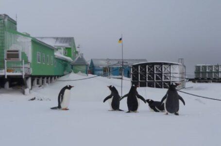 На станцію «Академік Вернадський» в Антарктиді неочікувано повернулися пінгвіни