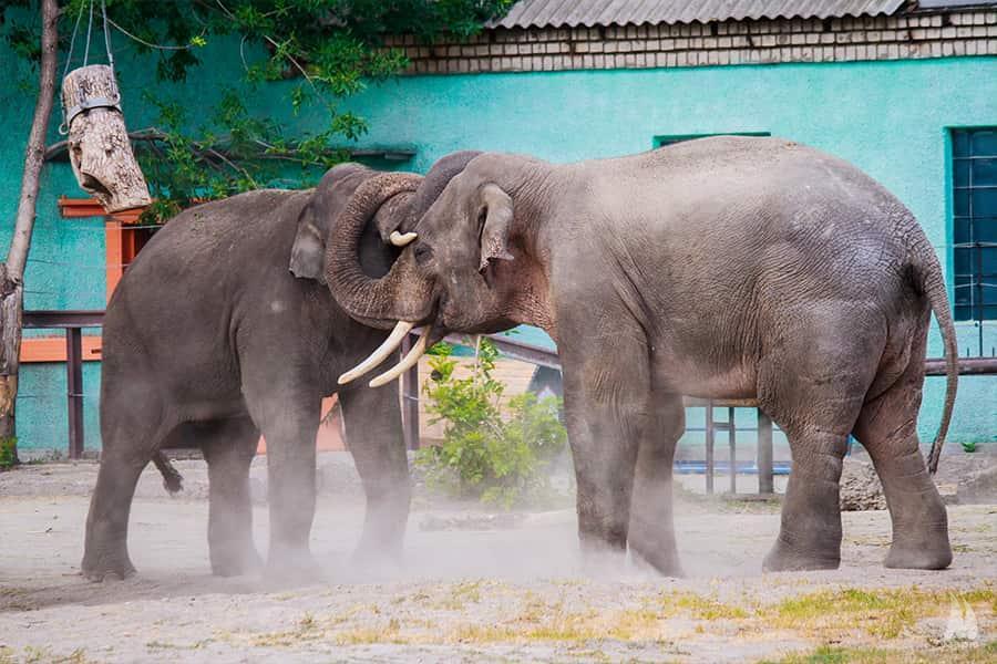 У Миколаївському зоопарку слон відсвяткував перший ювілей
