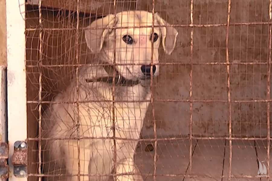 У Миколаєві побудують стерилізаційний центр для безпритульних тварин