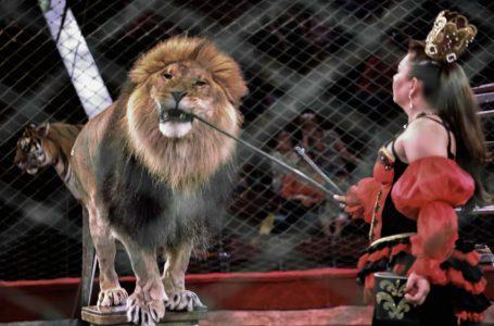 Чехія зробила перший крок до заборони цирків з тваринами