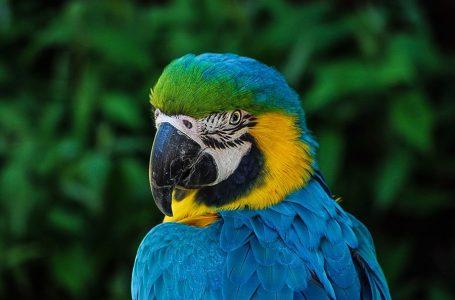 Папуга ледь не зірвав матч жіночої збірної Бразилії