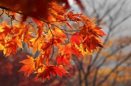 Два бабині літа: синоптики зробили прогноз на осінь