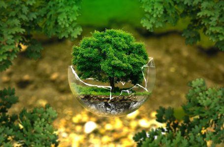 В Уганді посадять три мільйони дерев для відновлення екосистеми