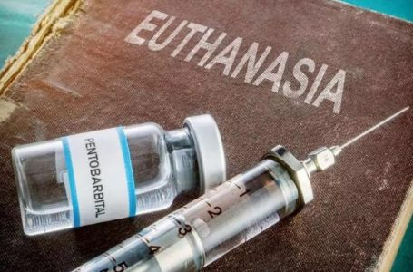 Нідерланди планують легалізувати евтаназію для дітей до 12 років