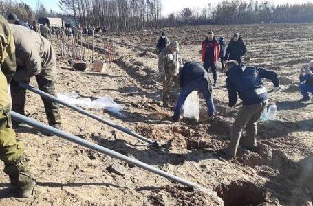На Луганщині волонтери висадили понад 10 тисяч дерев на місці пожеж