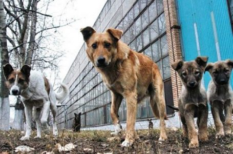 Миколаївська міськрада виплатить компенсацію жінці, на яку напала зграя безпритульних собак